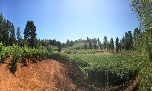 Panoramic view of Bradford Vineyard