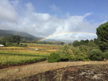 View of Funsten Vineyard in Dry Creek Valley