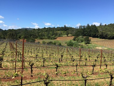 Early spring image of Borkow Vineyard in Dry Creek Valley